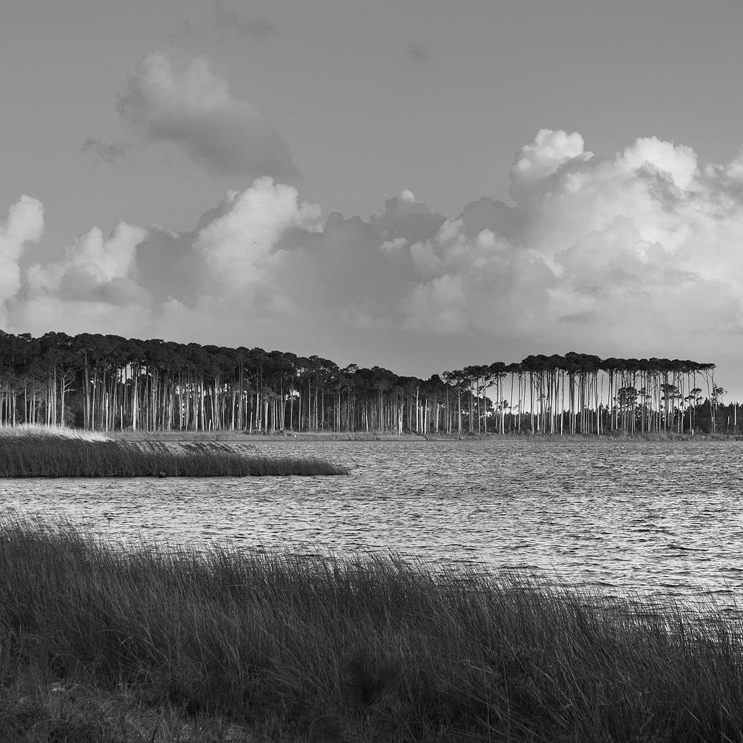 marsh by bay